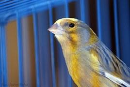 canary-20522__180