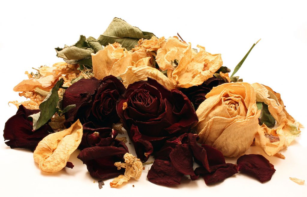 5848167 - dried white and red roses on isolated white background