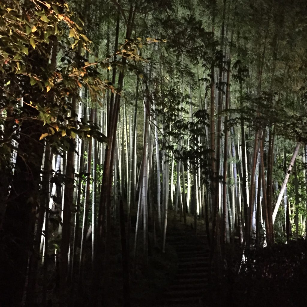 Kōdai-ji-Temple-night-bamboo-Kyoto